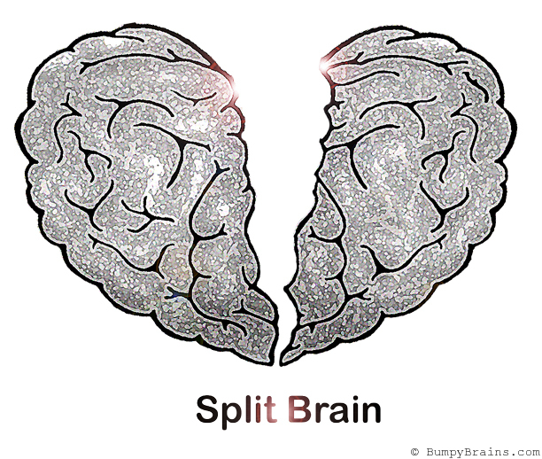 split brain If we split our brain into two, one would believe in god and the other would reject  the god but in real life, we use both brain simultaneously with.